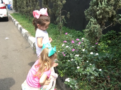 We had to stop and look at the beautiful flowers!